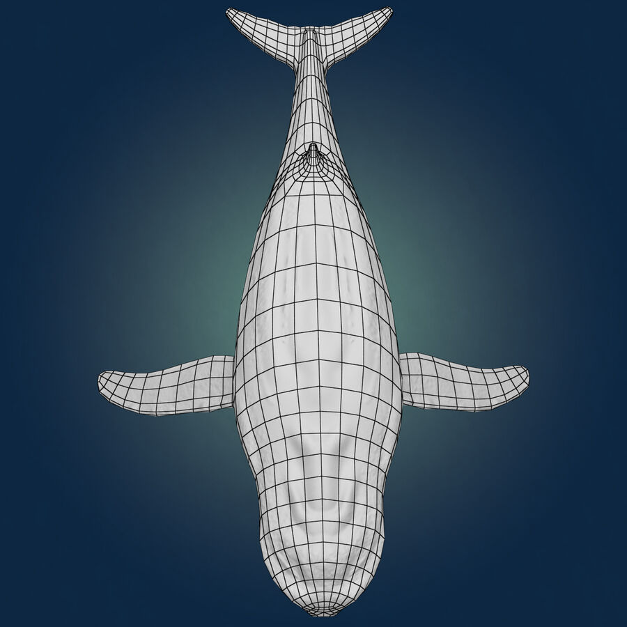 Aquatic Animals Collection royalty-free 3d model - Preview no. 4