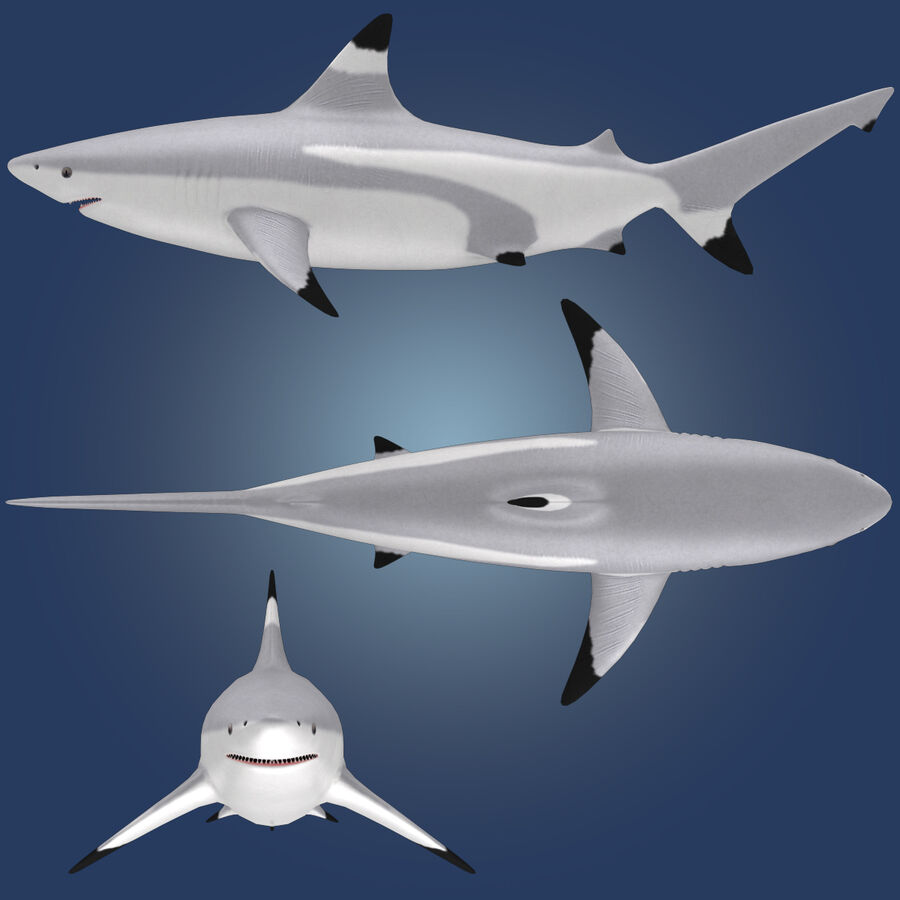 Aquatic Animals Collection royalty-free 3d model - Preview no. 8