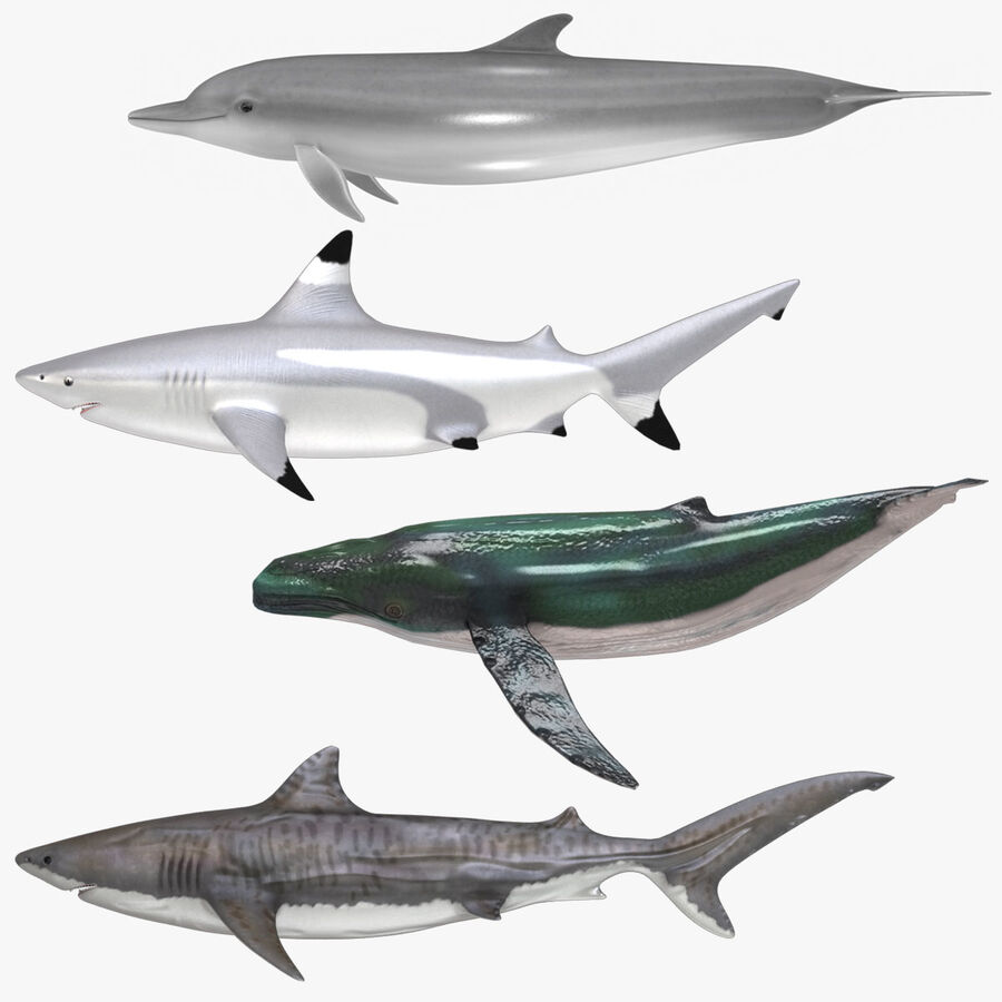 Aquatic Animals Collection royalty-free 3d model - Preview no. 1