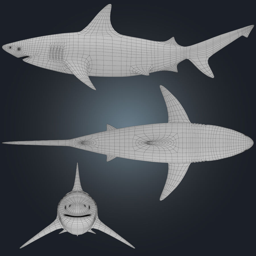 Aquatic Animals Collection royalty-free 3d model - Preview no. 9