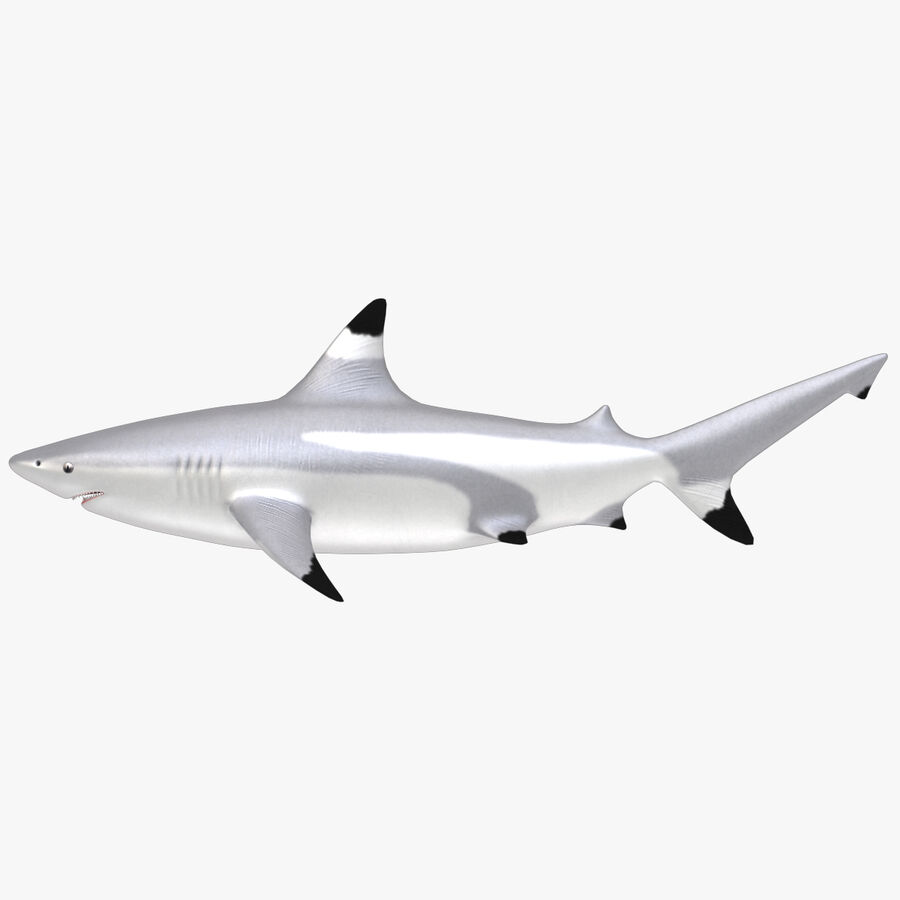 Aquatic Animals Collection royalty-free 3d model - Preview no. 6