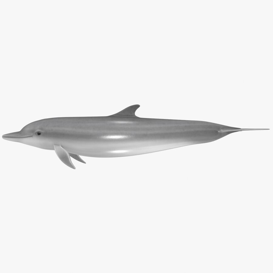 Aquatic Animals Collection royalty-free 3d model - Preview no. 16