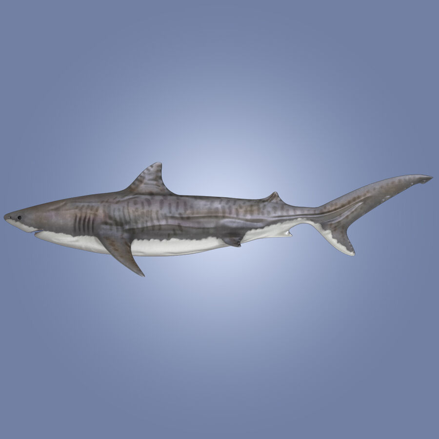 Aquatic Animals Collection royalty-free 3d model - Preview no. 12
