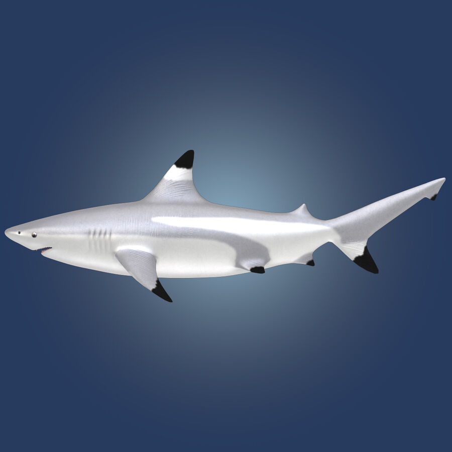 Aquatic Animals Collection royalty-free 3d model - Preview no. 7