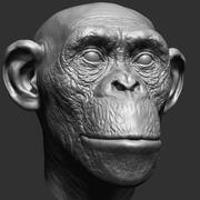 黑猩猩头 3d model