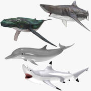 Aquatic Animals (ANIMATED) Collection 3d model