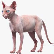 Sphynx-Katze (2) 3d model