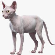 Sphynx-Katze (3) 3d model