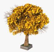 秋天一棵树 3d model