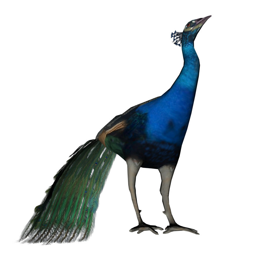 Peacock royalty-free 3d model - Preview no. 11