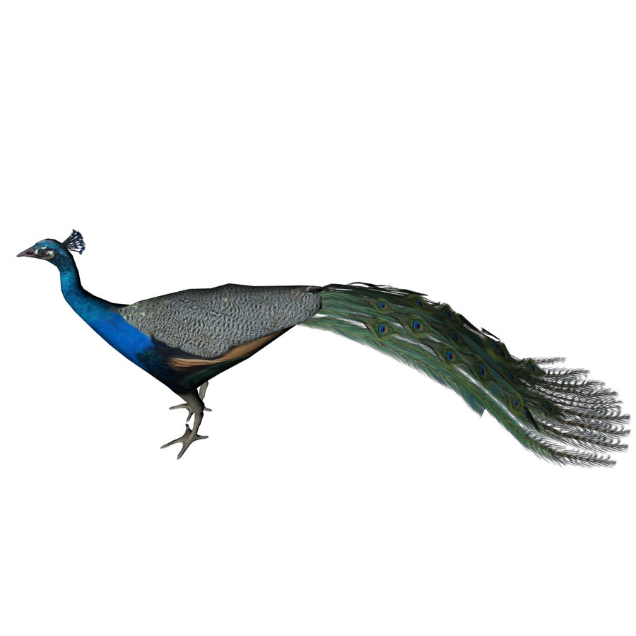 Peacock royalty-free 3d model - Preview no. 3