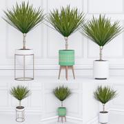 관엽 식물 33 3d model
