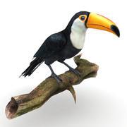 Toucan 3d model