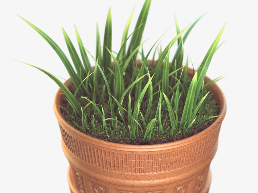 Plant Pot royalty-free 3d model - Preview no. 3