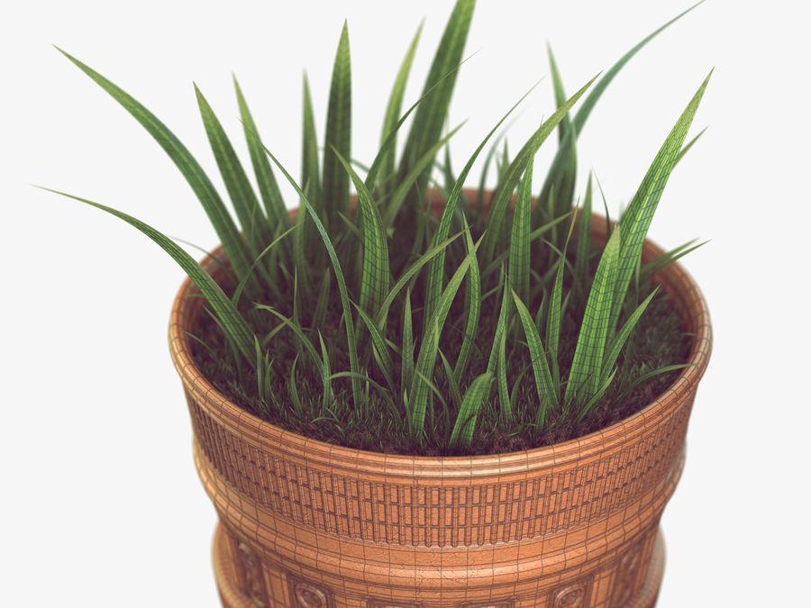 Plant Pot royalty-free 3d model - Preview no. 4