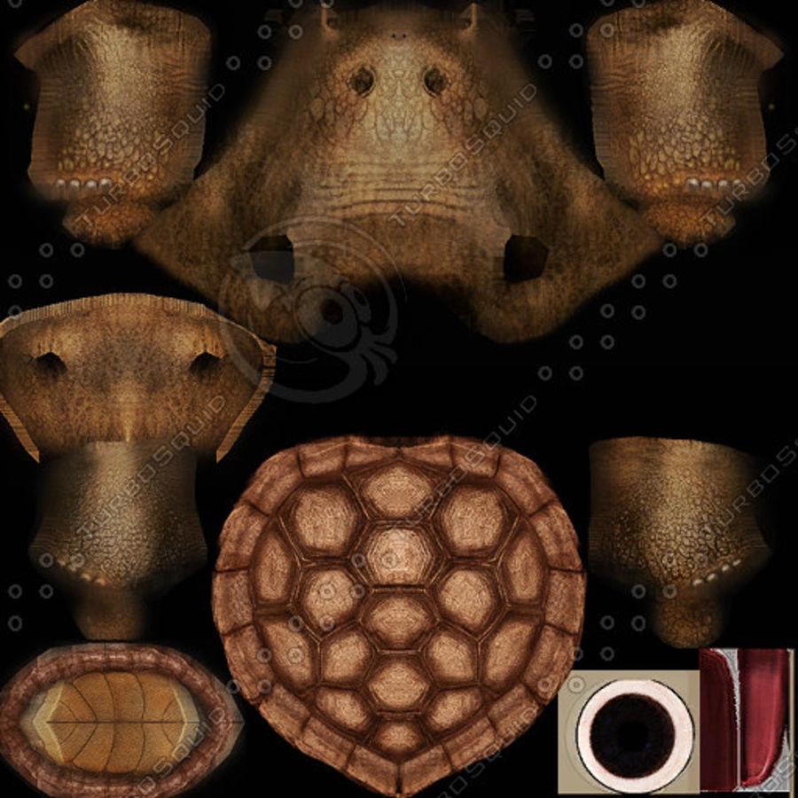 черепаха royalty-free 3d model - Preview no. 10