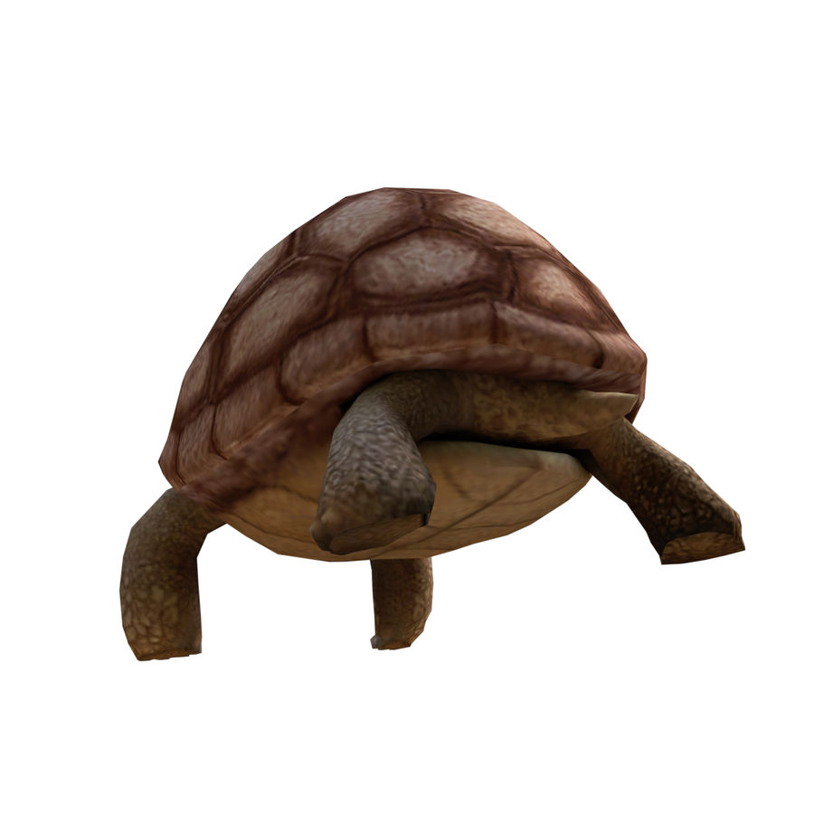 tartaruga royalty-free 3d model - Preview no. 5