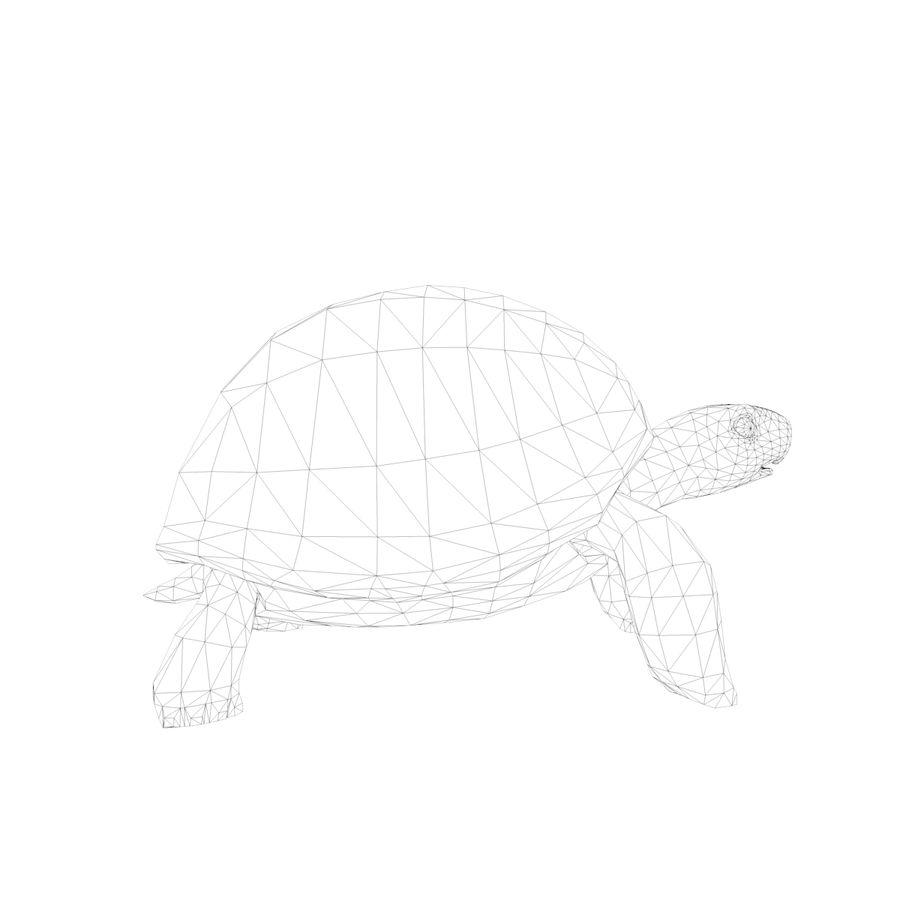 черепаха royalty-free 3d model - Preview no. 8