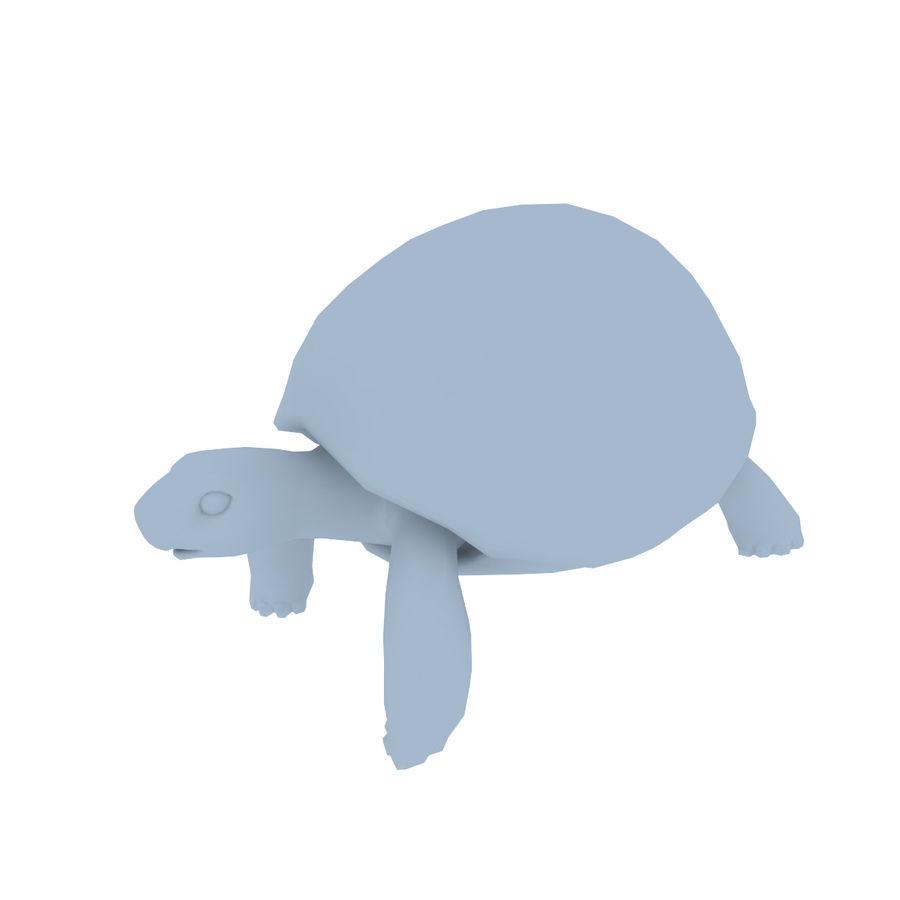черепаха royalty-free 3d model - Preview no. 14