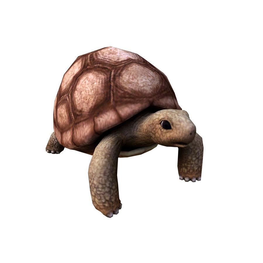 черепаха royalty-free 3d model - Preview no. 2