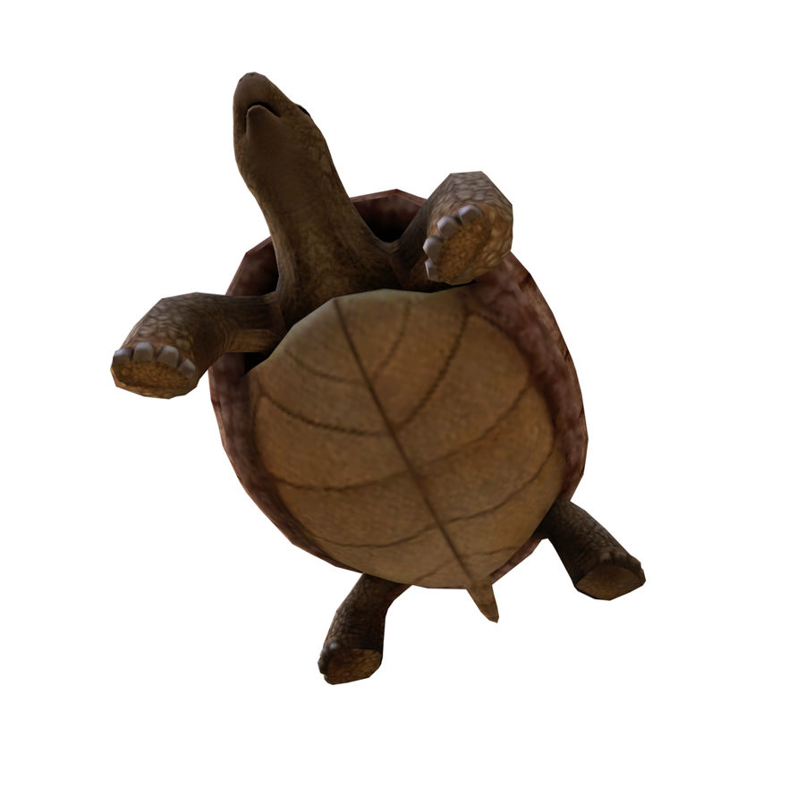 tartaruga royalty-free 3d model - Preview no. 4