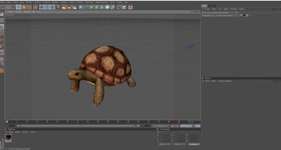 черепаха royalty-free 3d model - Preview no. 19