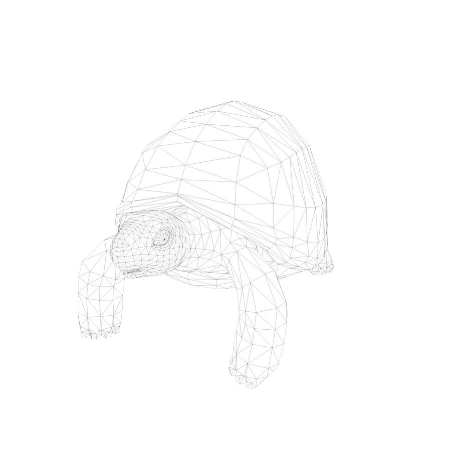 черепаха royalty-free 3d model - Preview no. 11