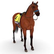 Horse - American Pharoah 3d model