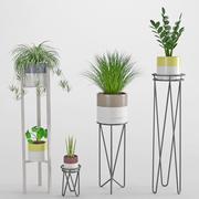 室内植物35 3d model