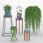 Комнатное растение 36 3d model