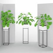 観葉植物38(壁の衝突) 3d model