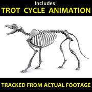 Canine Skeleton - Includes an Animation 3d model