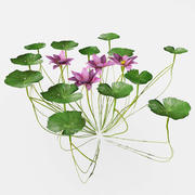 su zambakları 3d model