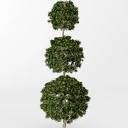 Boxwood topiary 3d model