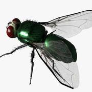 Grön fluga 3d model