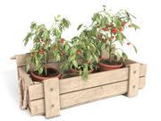 Pomidorowe Rośliny w Drewnianym Pudełku 3d model