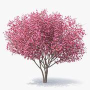 Magnolia Tulip Tree 3d model