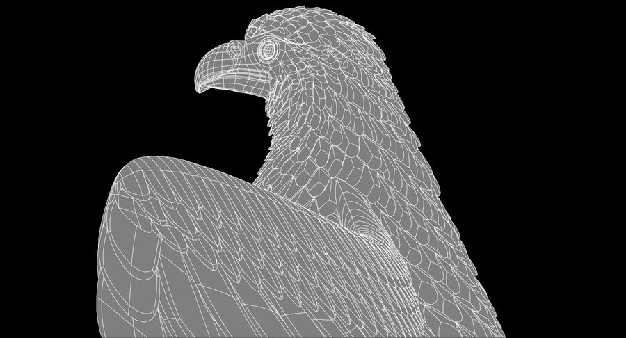 Eagle royalty-free 3d model - Preview no. 20