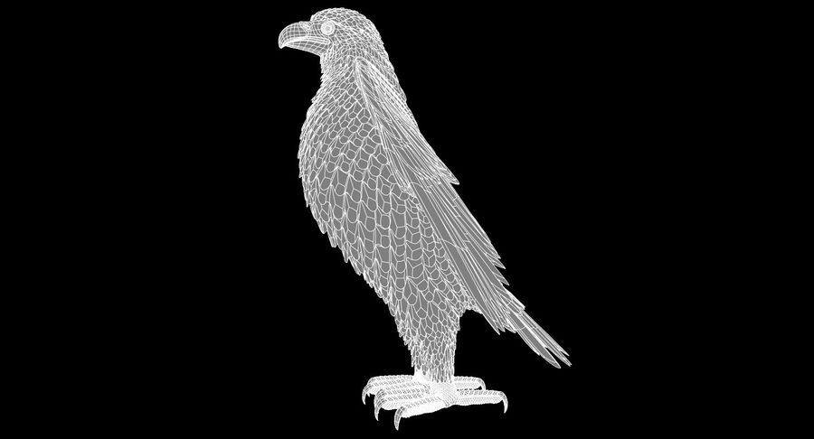 Eagle royalty-free 3d model - Preview no. 14