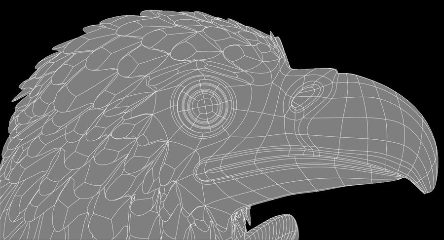 Adler royalty-free 3d model - Preview no. 13