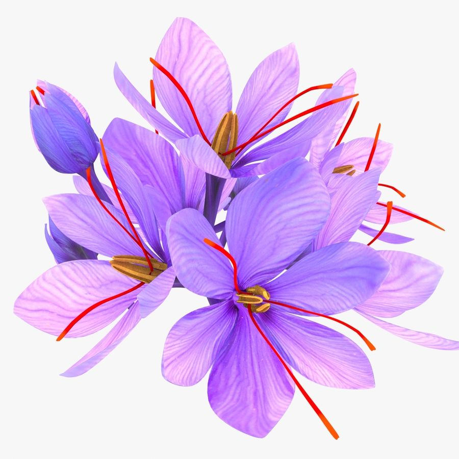 Plant Parts of Crocus with Saffron royalty-free 3d model - Preview no. 13