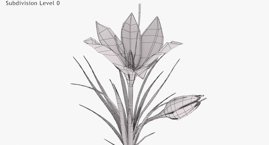 Plant Parts of Crocus with Saffron royalty-free 3d model - Preview no. 8