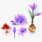 Plantendelen van Crocus met Saffraan 3d model