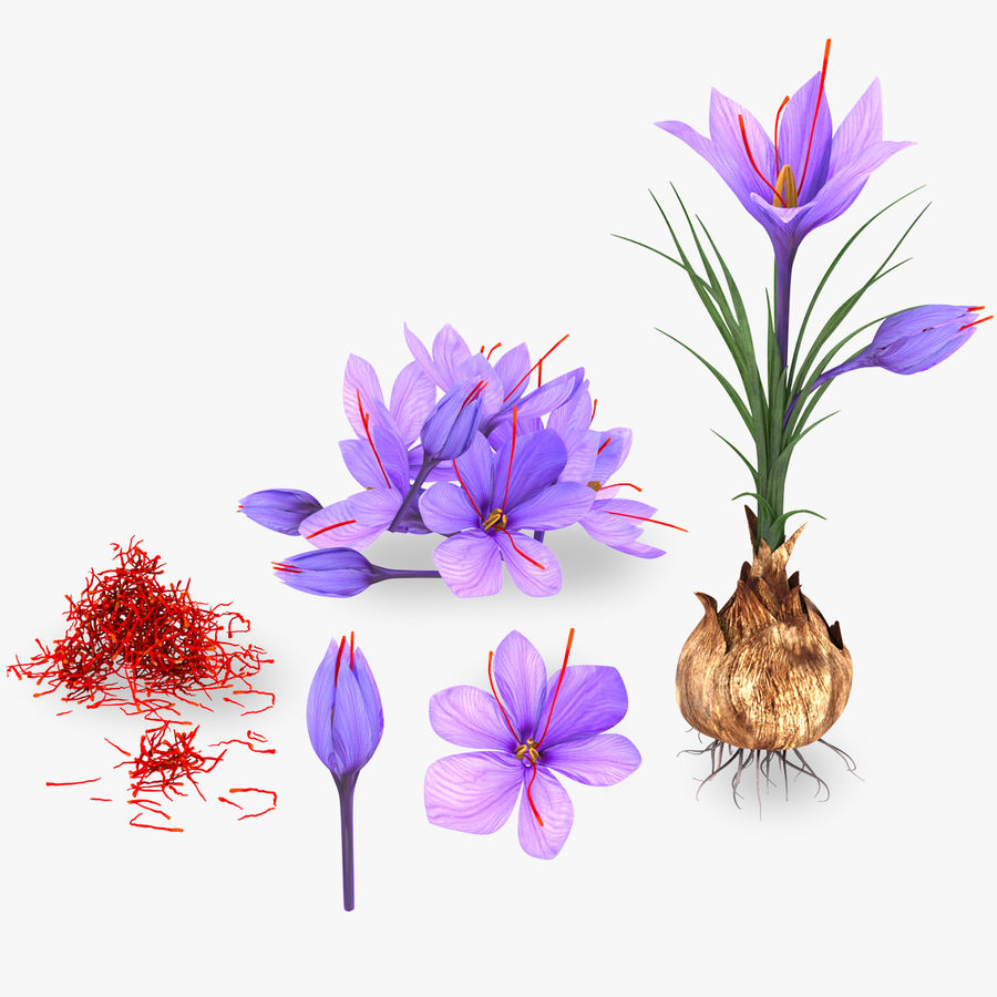 Plant Parts of Crocus with Saffron royalty-free 3d model - Preview no. 1