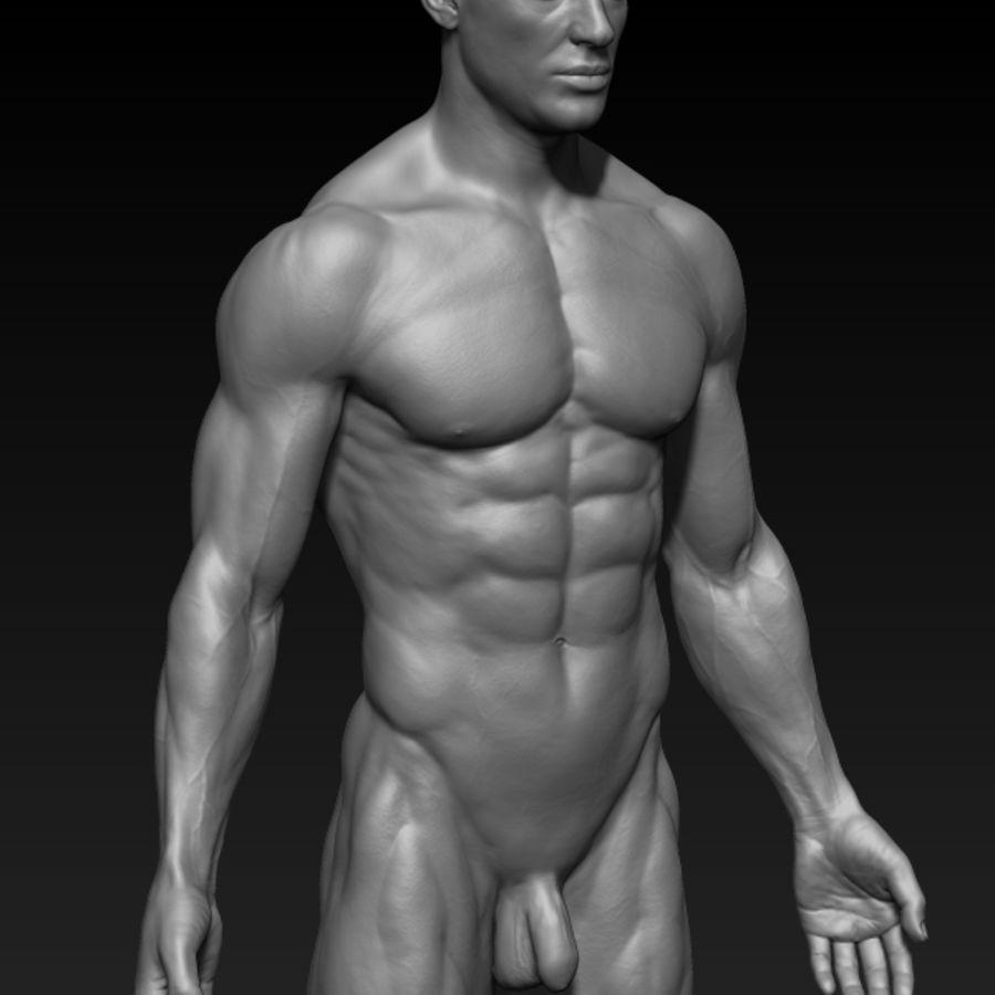 volledige mannelijke anatomie royalty-free 3d model - Preview no. 5