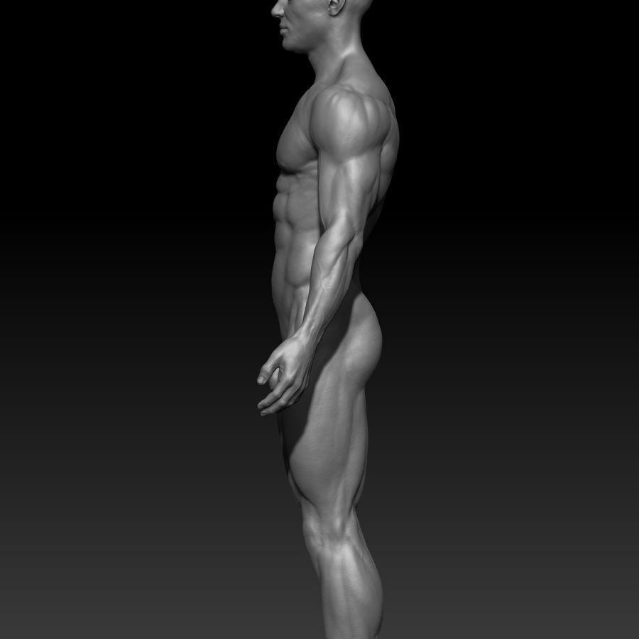 volledige mannelijke anatomie royalty-free 3d model - Preview no. 2