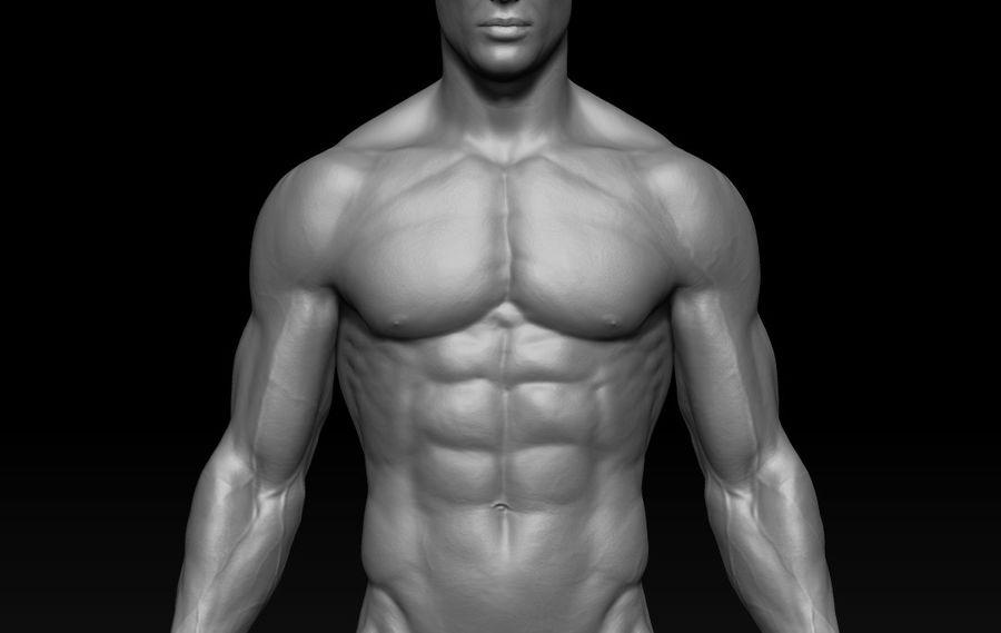 volledige mannelijke anatomie royalty-free 3d model - Preview no. 4