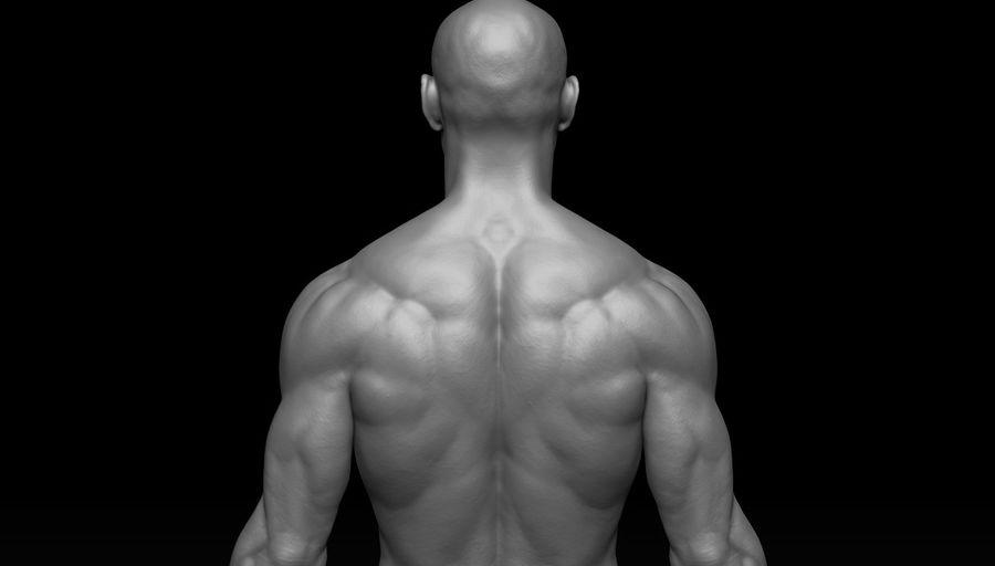 volledige mannelijke anatomie royalty-free 3d model - Preview no. 3