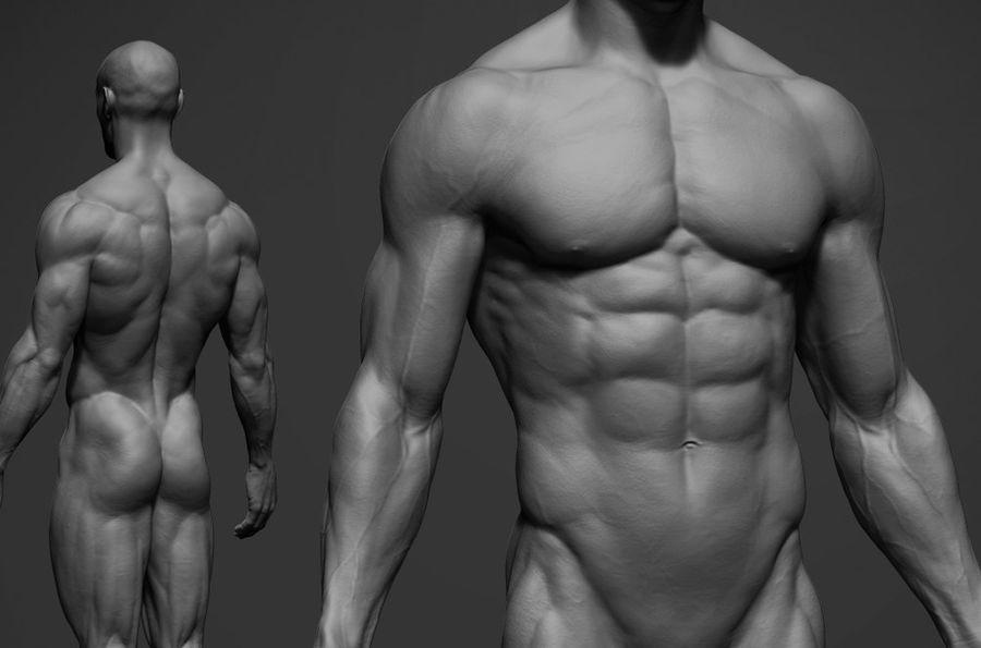 volledige mannelijke anatomie royalty-free 3d model - Preview no. 1
