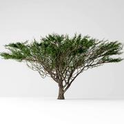 Umbrella  tree 3d model